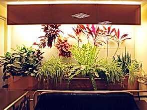 Как обустроить зимний сад на своём балконе?